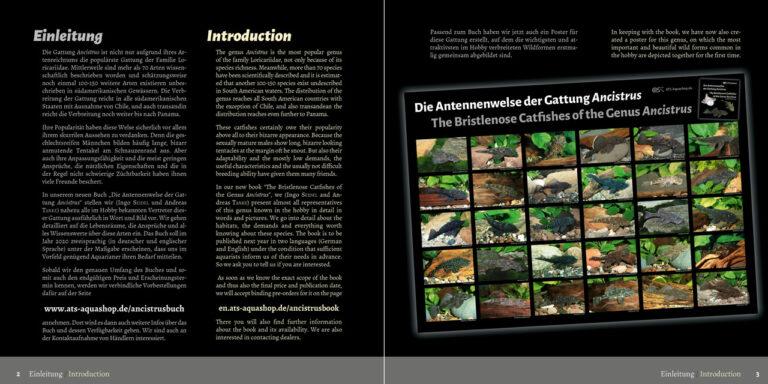 Die Antennenwelse der Gattung Ancistrus / The Bristlenose Catfishes of the Genus Ancistrus
