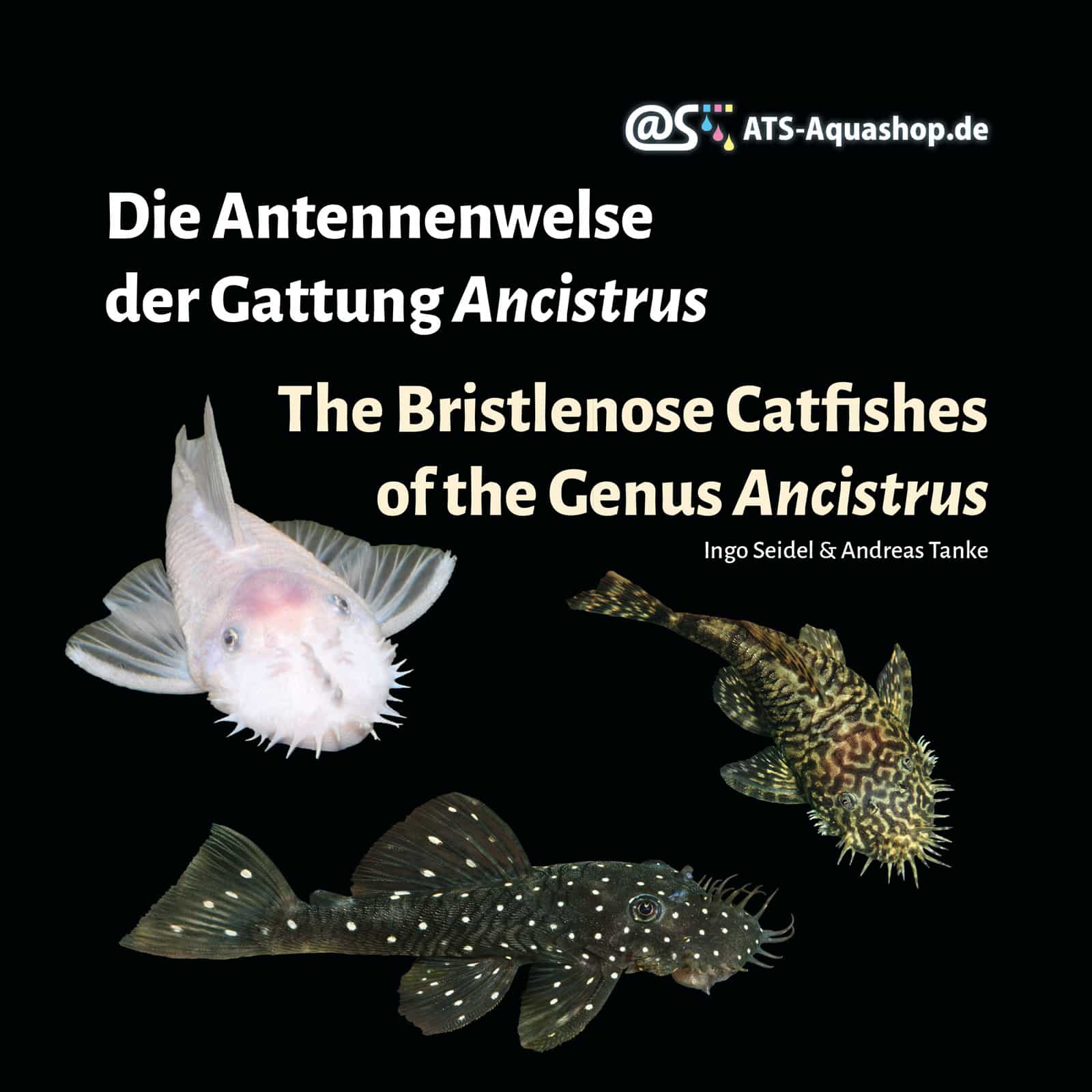 Cover: Die Antennenwelse der Gattung Ancistrus / The Bristlenose Catfishes of the Genus Ancistrus