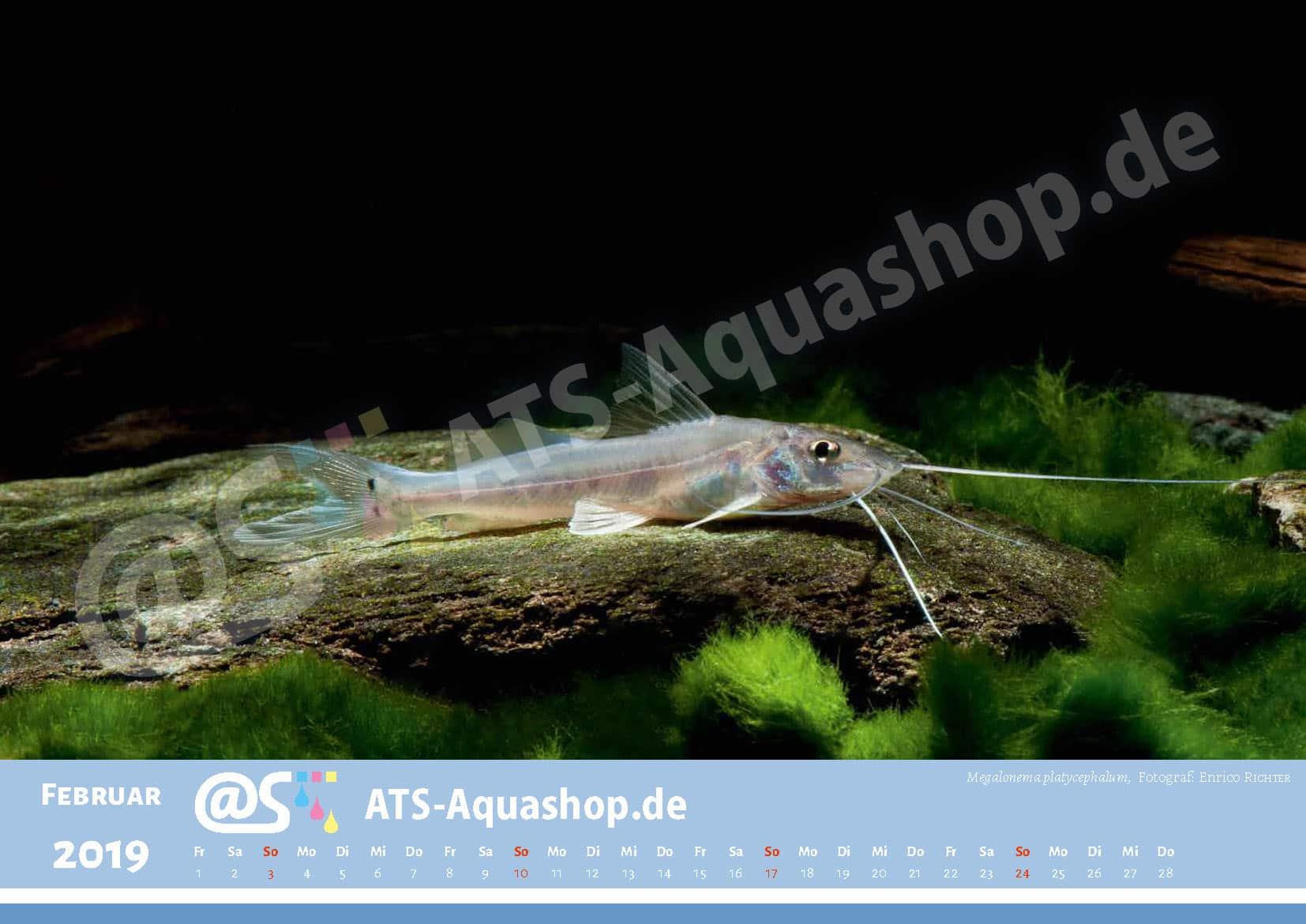 Photo calendar 2019 DIN A3: Megalonema platycephalum