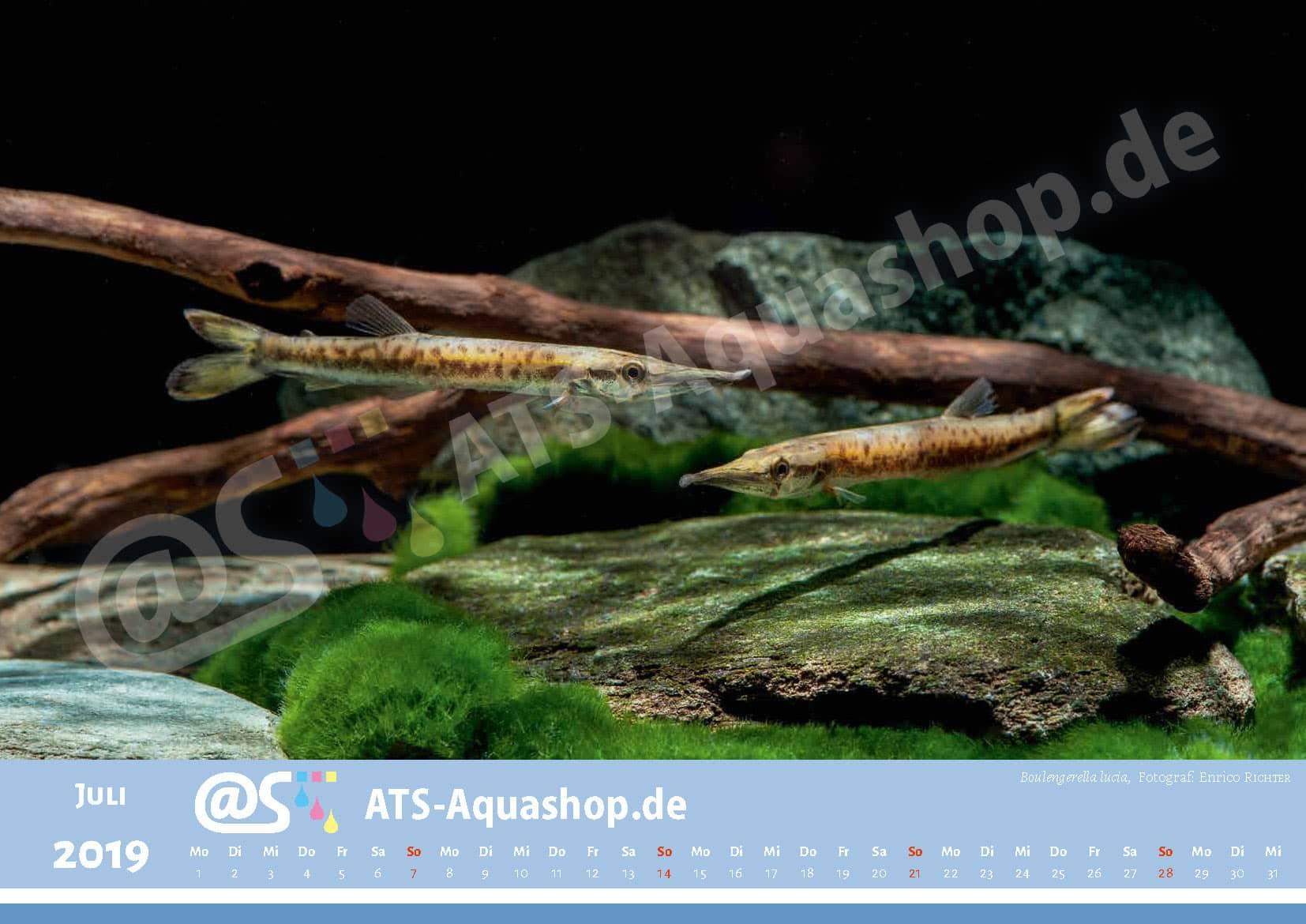 Photo calendar 2019 DIN A3: Boulengerella lucia