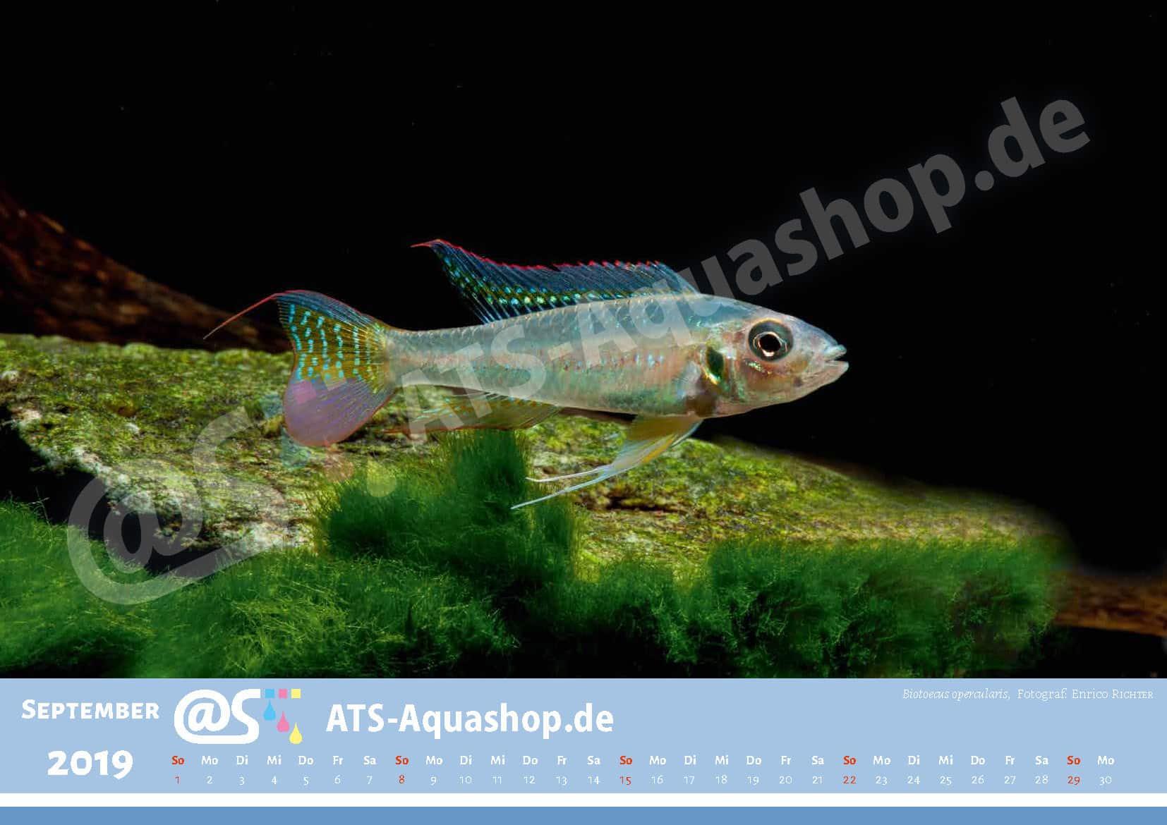 Photo calendar 2019 DIN A3: Biotoecus opercularis