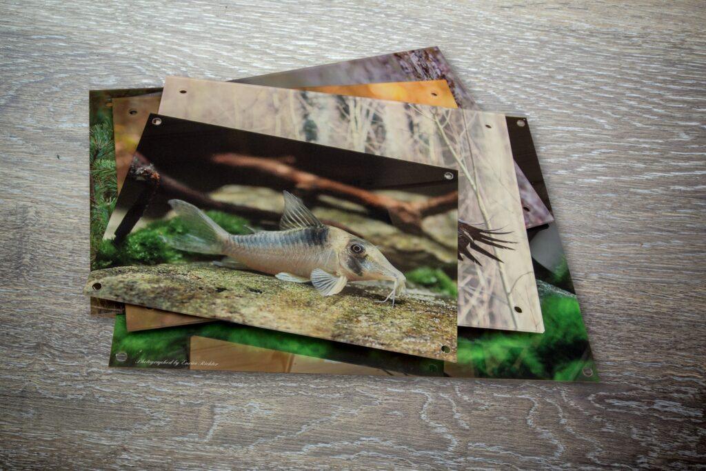 Art Prints on Acrylic glass