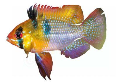 Neue Produkte: Aufkleber von Fischen