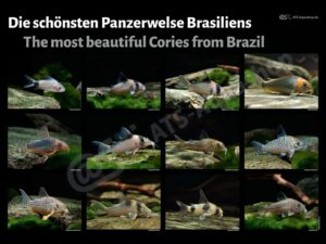 Posters: The most beautiful Cories from Brazil (Enrico Richter)