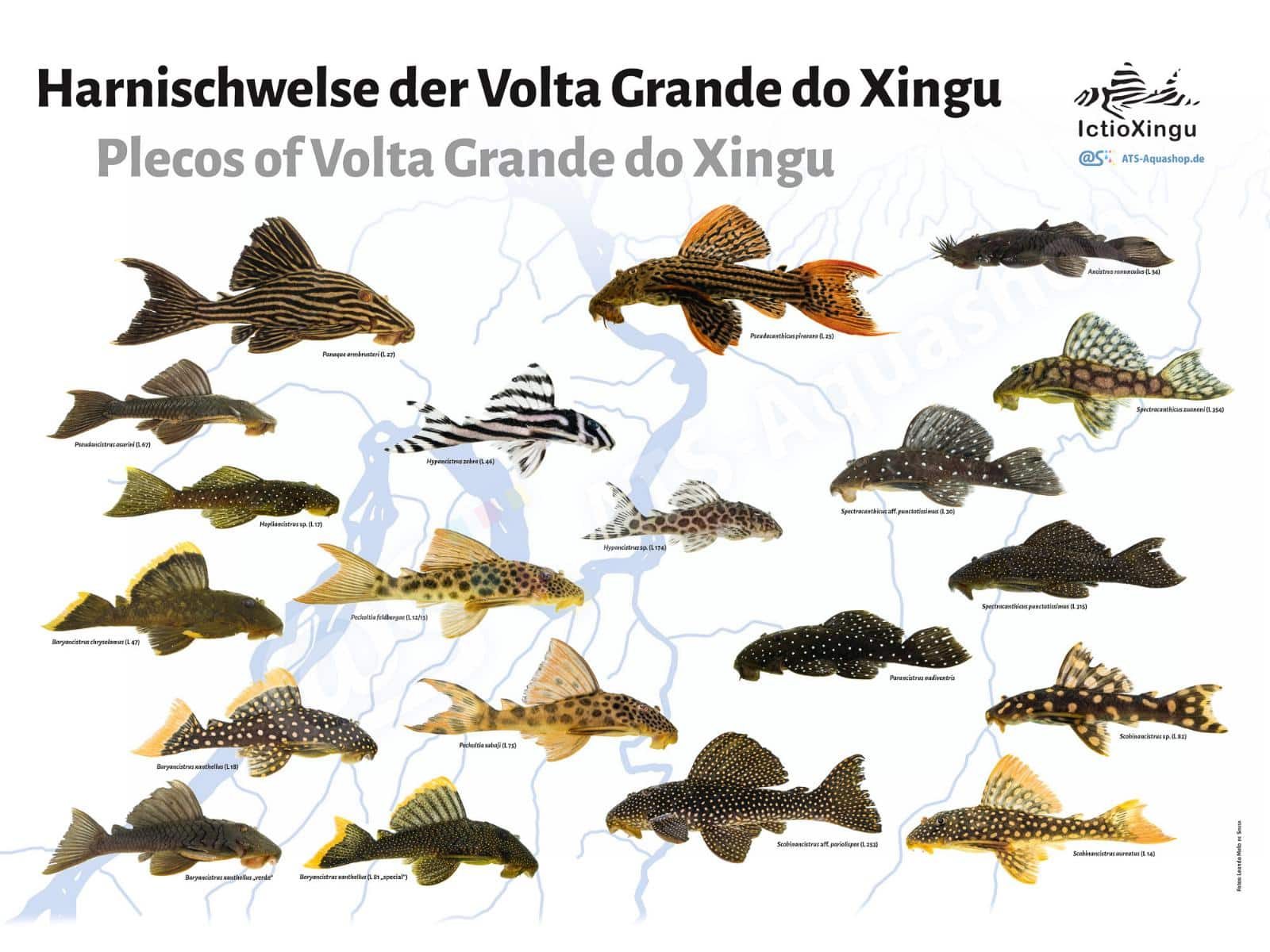 Posters: Plecos of Volta Grande do Xingu