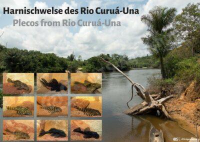 Poster: Harnischwelse des Rio Curuá-Una
