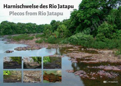 Poster: Harnischwelse des Rio Jatapu