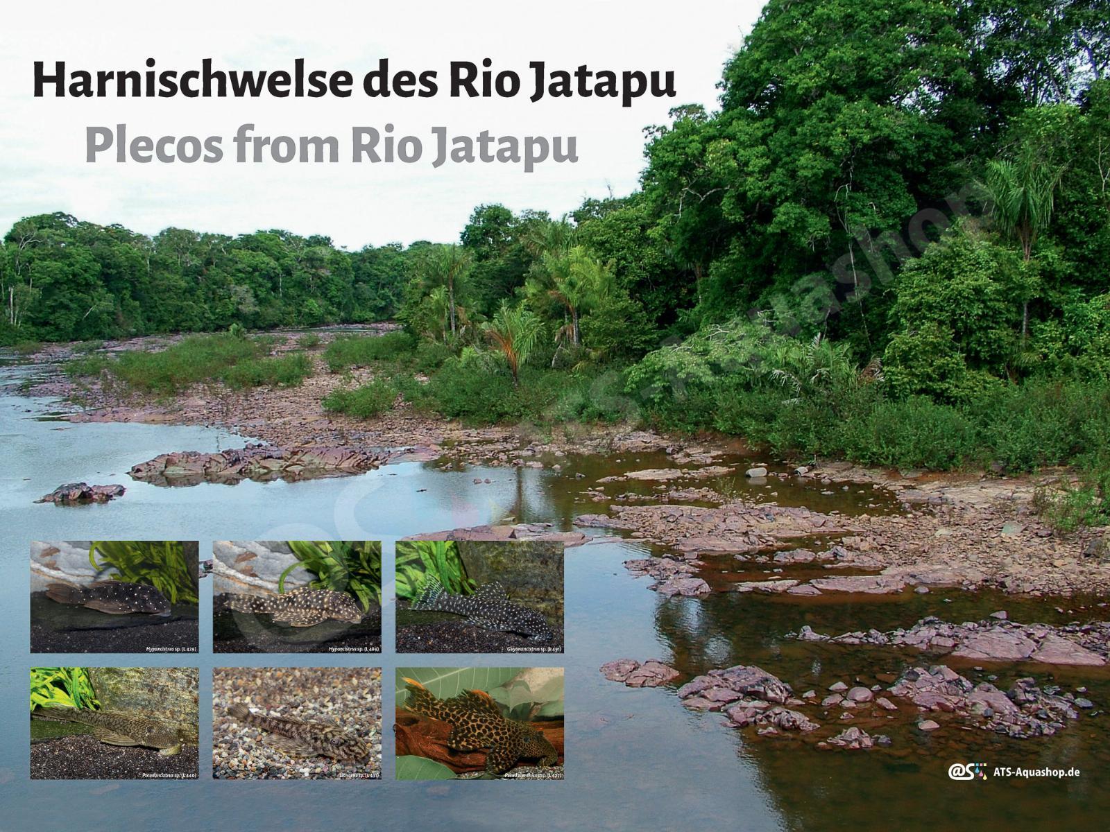 Posters: Plecos from Rio Jatapu (Andreas Tanke)