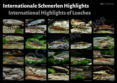 Poster: Internationale Schmerlen Highlights