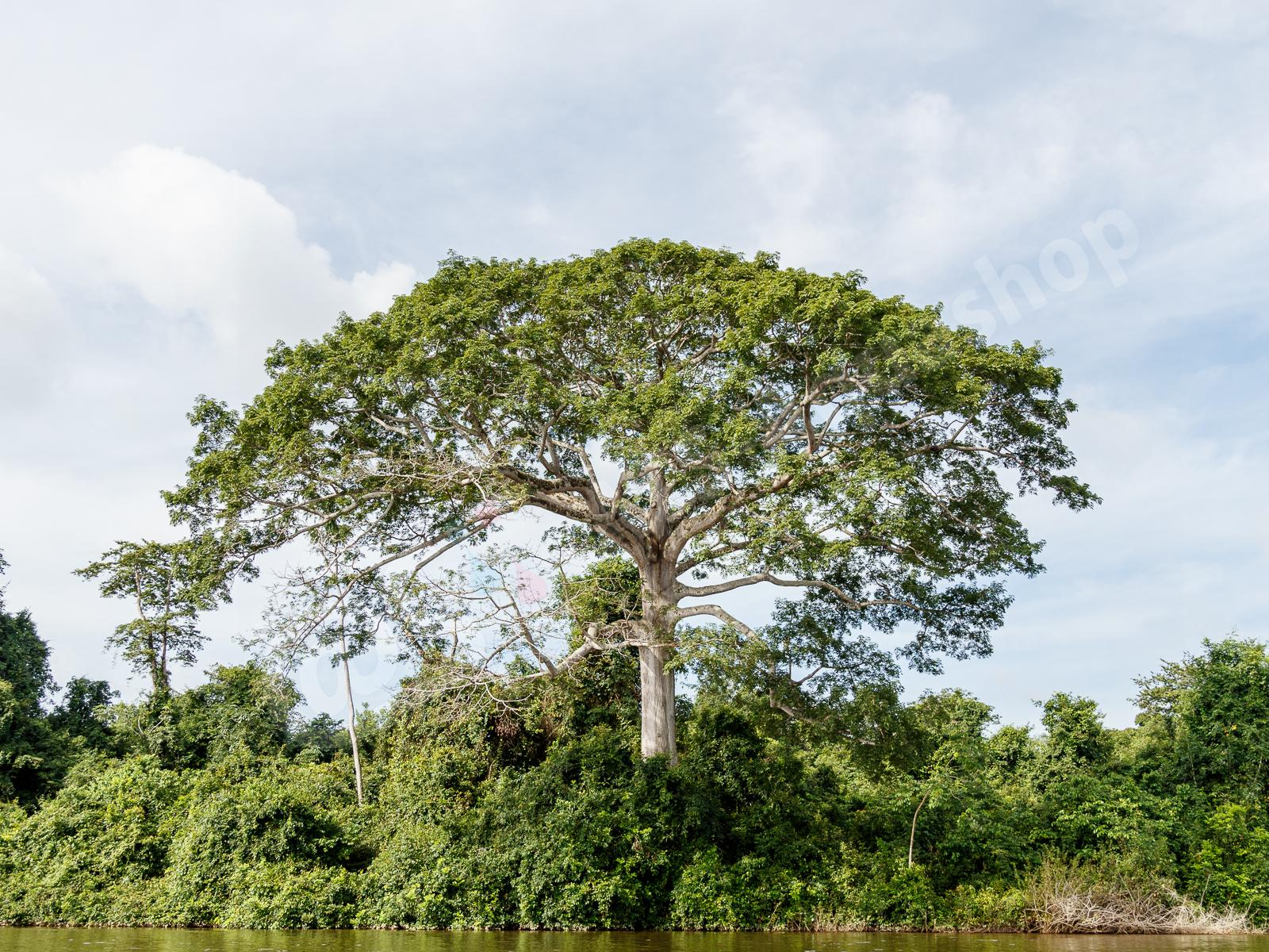 Acrylic: Rio Xingu Impressionen