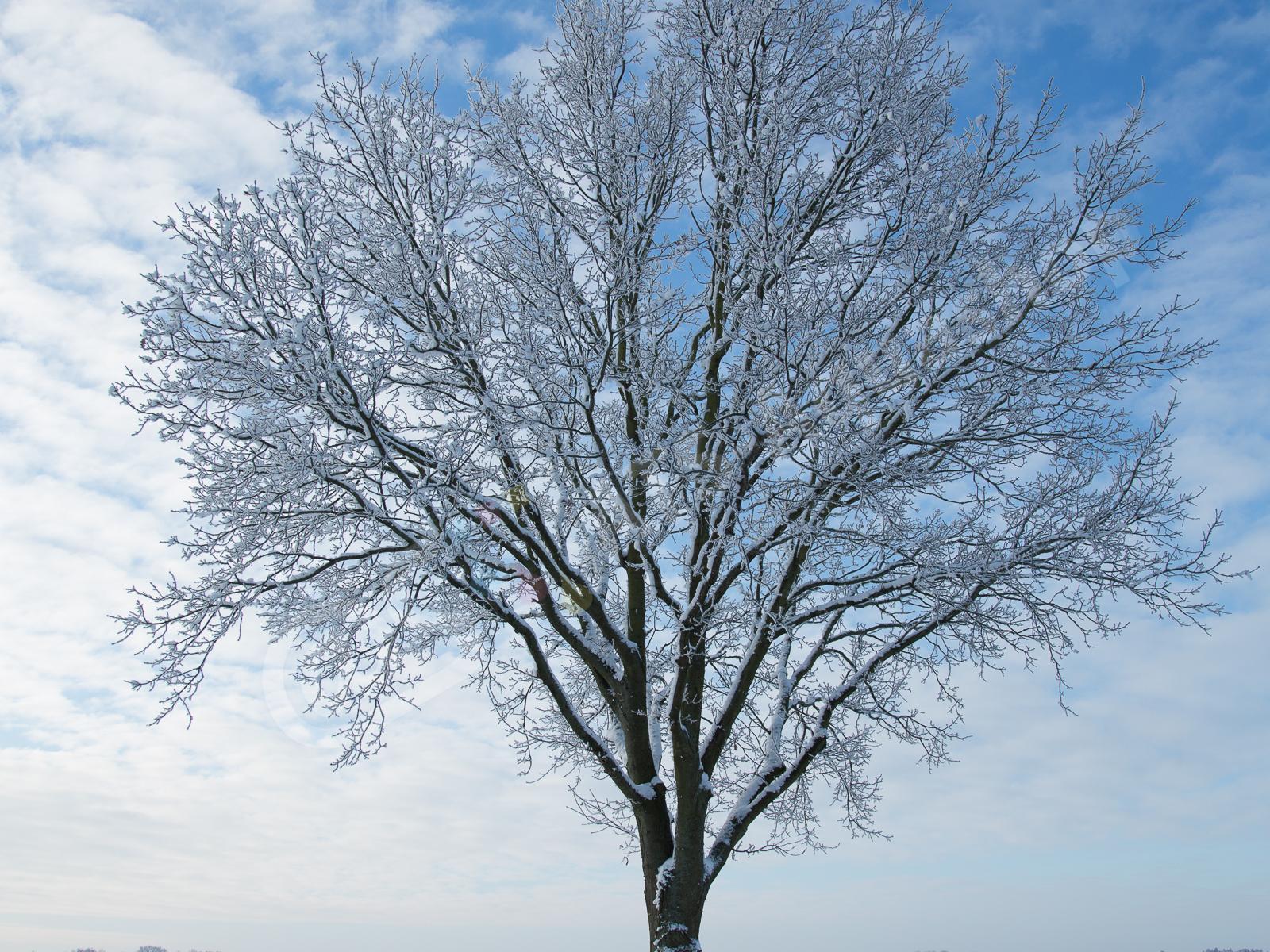 winterimpressionen andreas tanke 0159 8