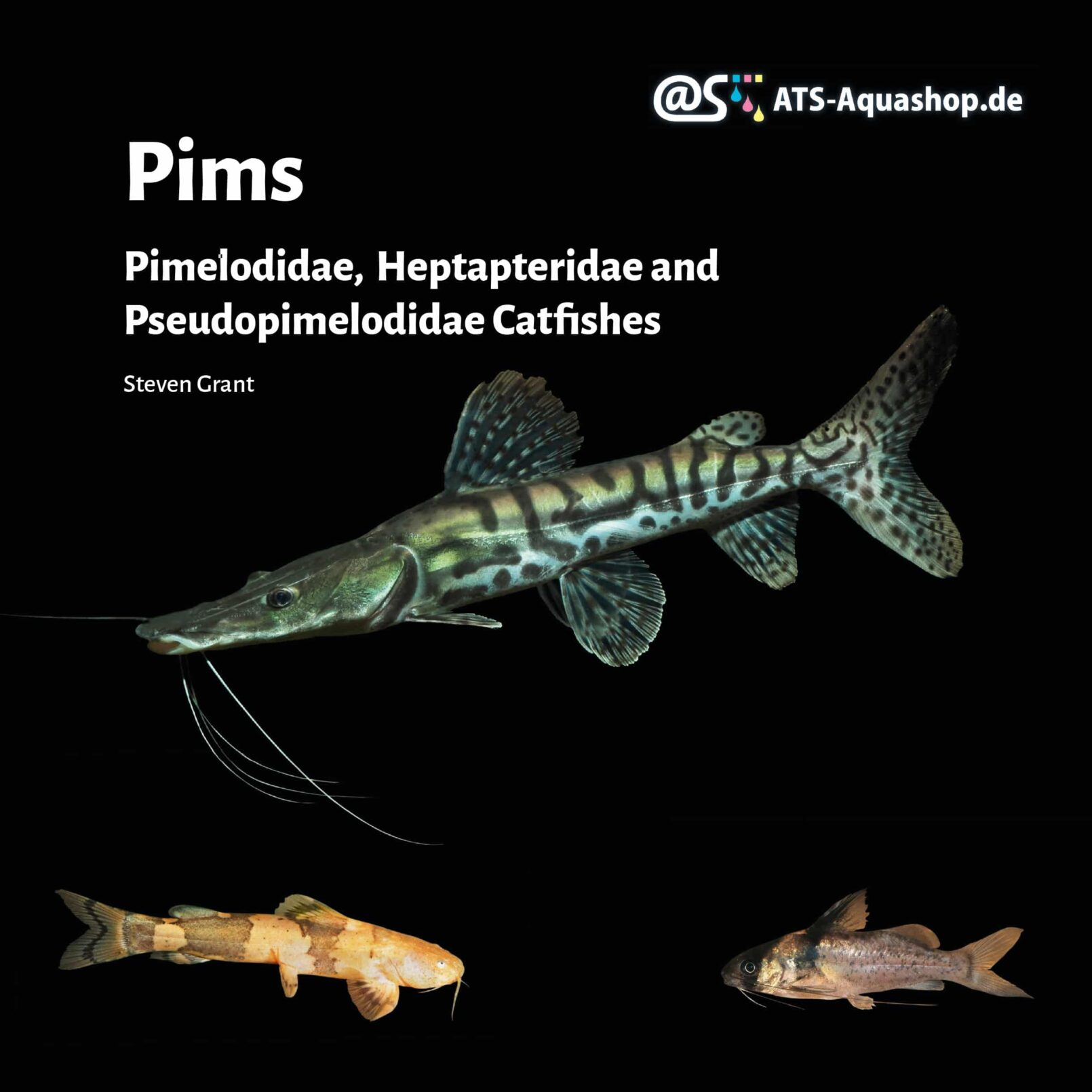 Pims - Pimelodidae,  Heptapteridae and  Pseudopimelodidae Catfishes / Steven Grant