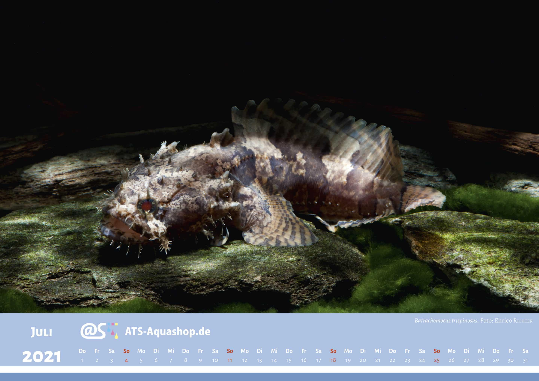 ATS-Aquashop Foto Jahreskalender 2021 DIN A3 (Juli): Batrachomeus trispinosus