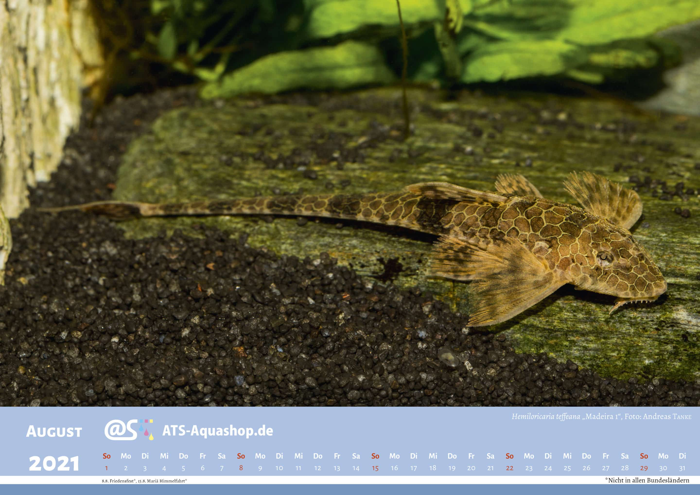"ATS-Aquashop Foto Jahreskalender 2021 DIN A3 (August): Hemilorcaria teffeana ""Rio Madeira I"""