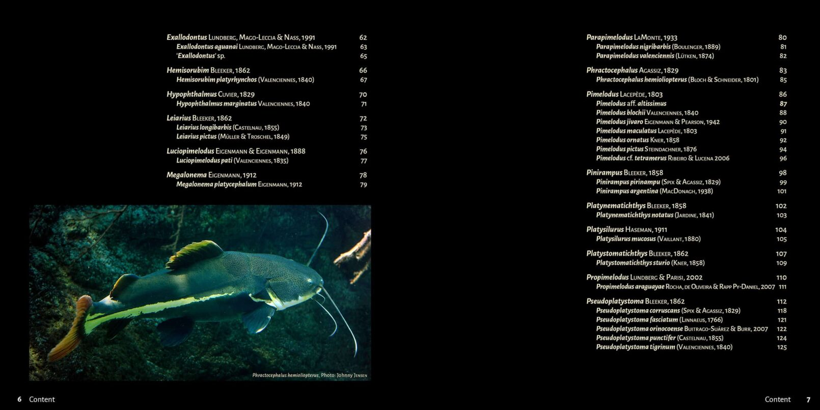 Pims - Pimelodidae,  Heptapteridae and  Pseudopimelodidae Catfishes / Steven Grant pages 6, 7
