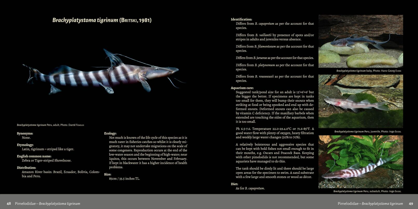 Pims - Pimelodidae,  Heptapteridae and  Pseudopimelodidae Catfishes / Steven Grant pages 48, 49