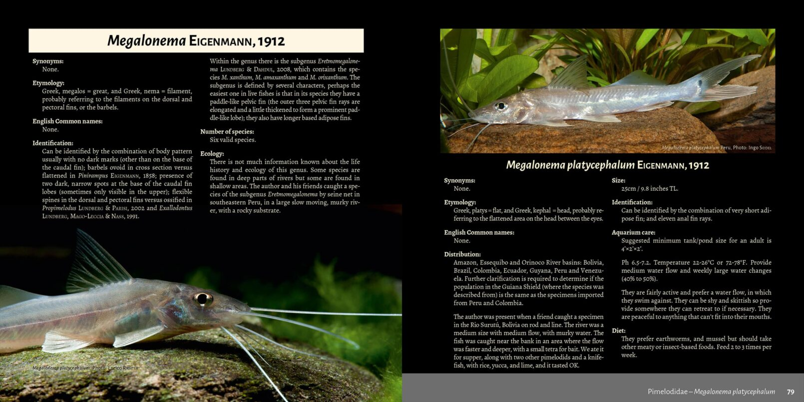 Pims - Pimelodidae,  Heptapteridae and  Pseudopimelodidae Catfishes / Steven Grant pages 78, 79
