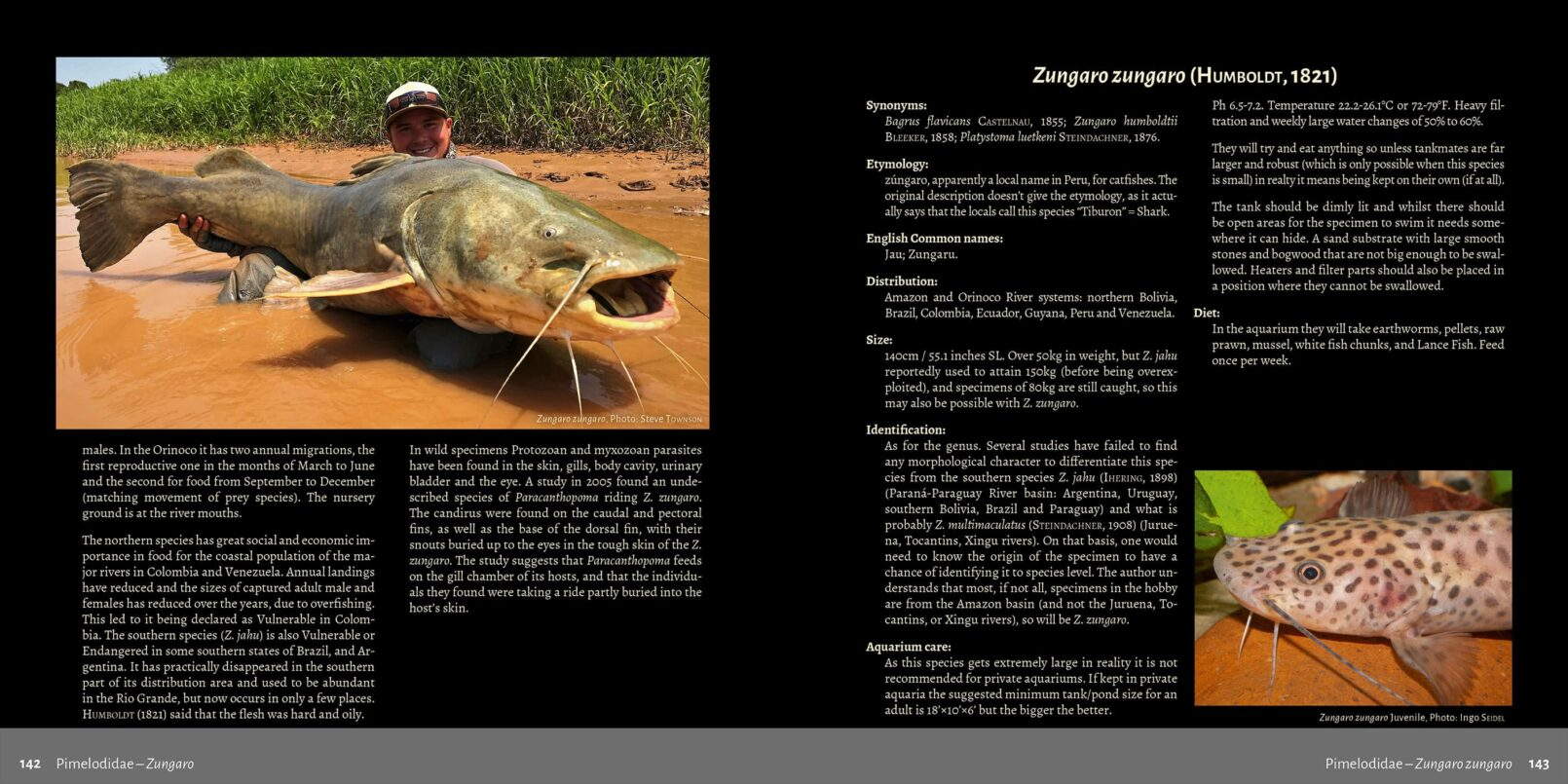 Pims - Pimelodidae, Heptapteridae and Pseudopimelodidae Catfishes / Steven Grant pages 142, 143