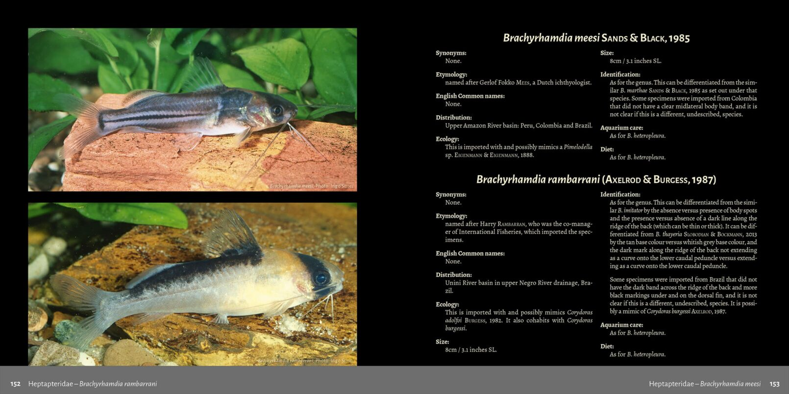 Pims - Pimelodidae,  Heptapteridae and  Pseudopimelodidae Catfishes / Steven Grant pages 152, 153